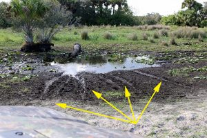 Gator hole showing slide marks